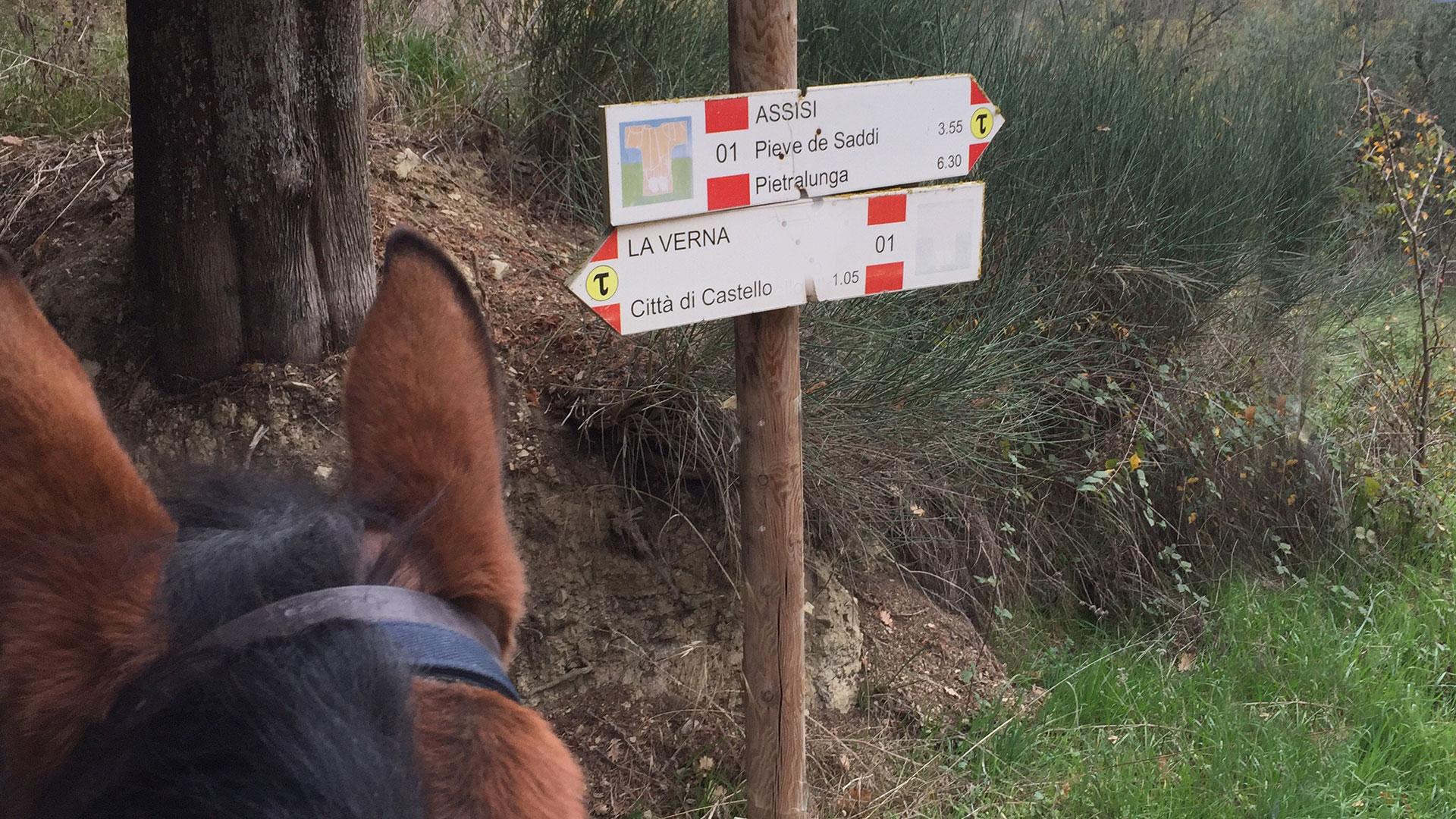 trekking-a-cavallo-a-citta-di-castello-centro-ippico-san-giovanni